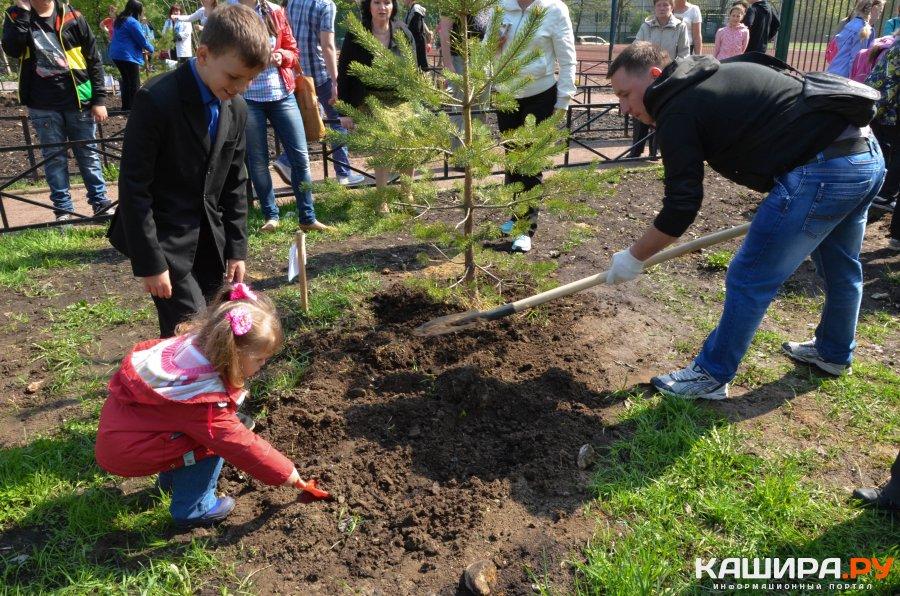 Более 300 деревьев посадят в Кашире в рамках областной акции