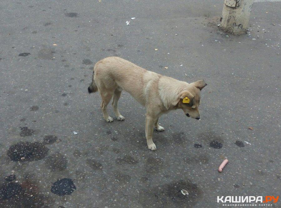 Карантин по бешенству животных установили в Кашире