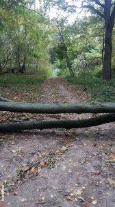 Закрыли дорогу деревьями